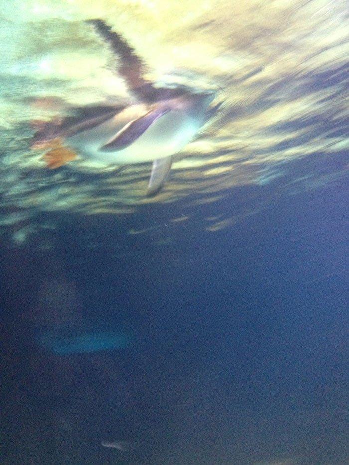 Roll Around the Block - Aquarium