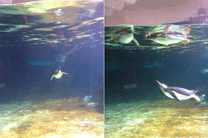 roll-around-the-block-aquarium-02